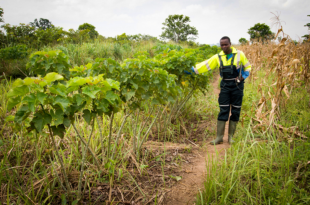 Klimaschutzprojekt in Togo von natureOffice